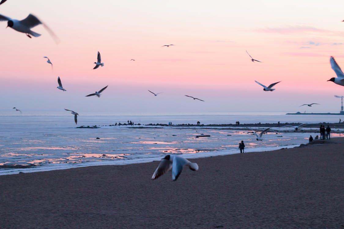 Photo of Flying Birds On Beach