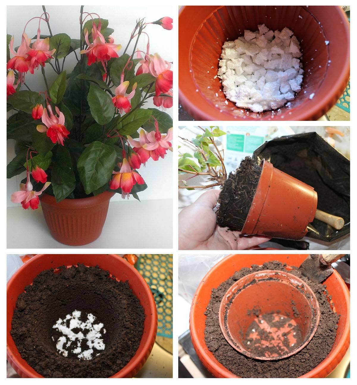 Подготовка к пересадке комнатных растений