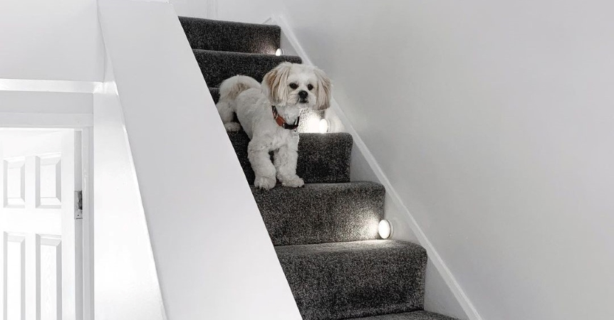 Dog stands beside safety lighting on stairs.