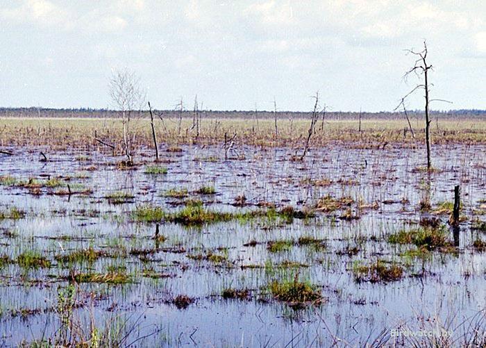 Ольманские болота. Фото Николай Черкас