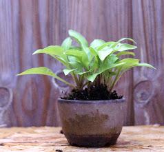 Voici mes plantes d'accompagnements 6x3MUUiwUrYSql82eG5qSn7EN2q-r5cU0mbDeHmWoA=w238-h221-p-no