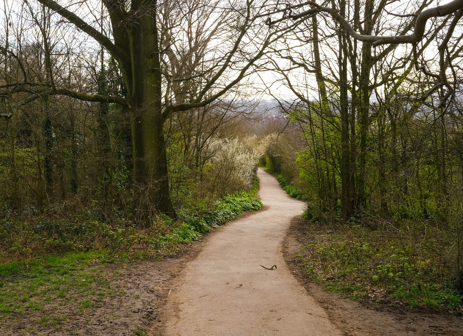 view of woodland path in Hampstead Heath