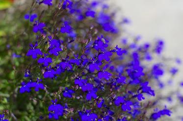 美容室の前を飾る花