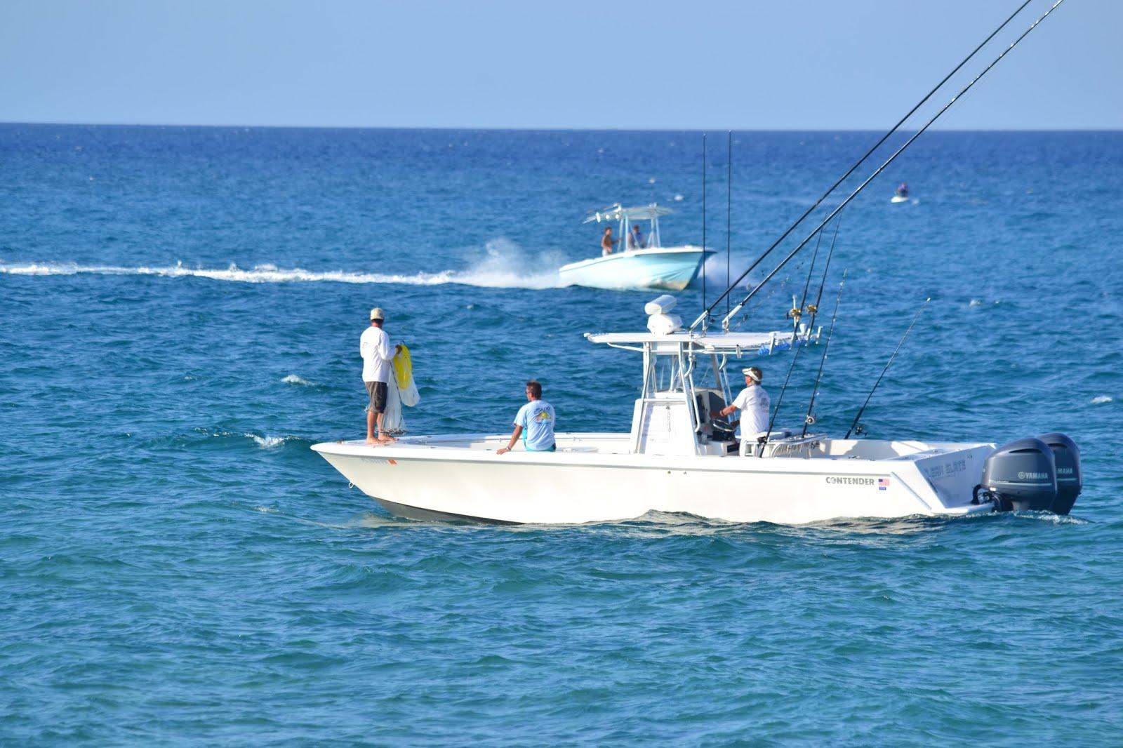 Ocean Park_2014_life at sea_santoproducts