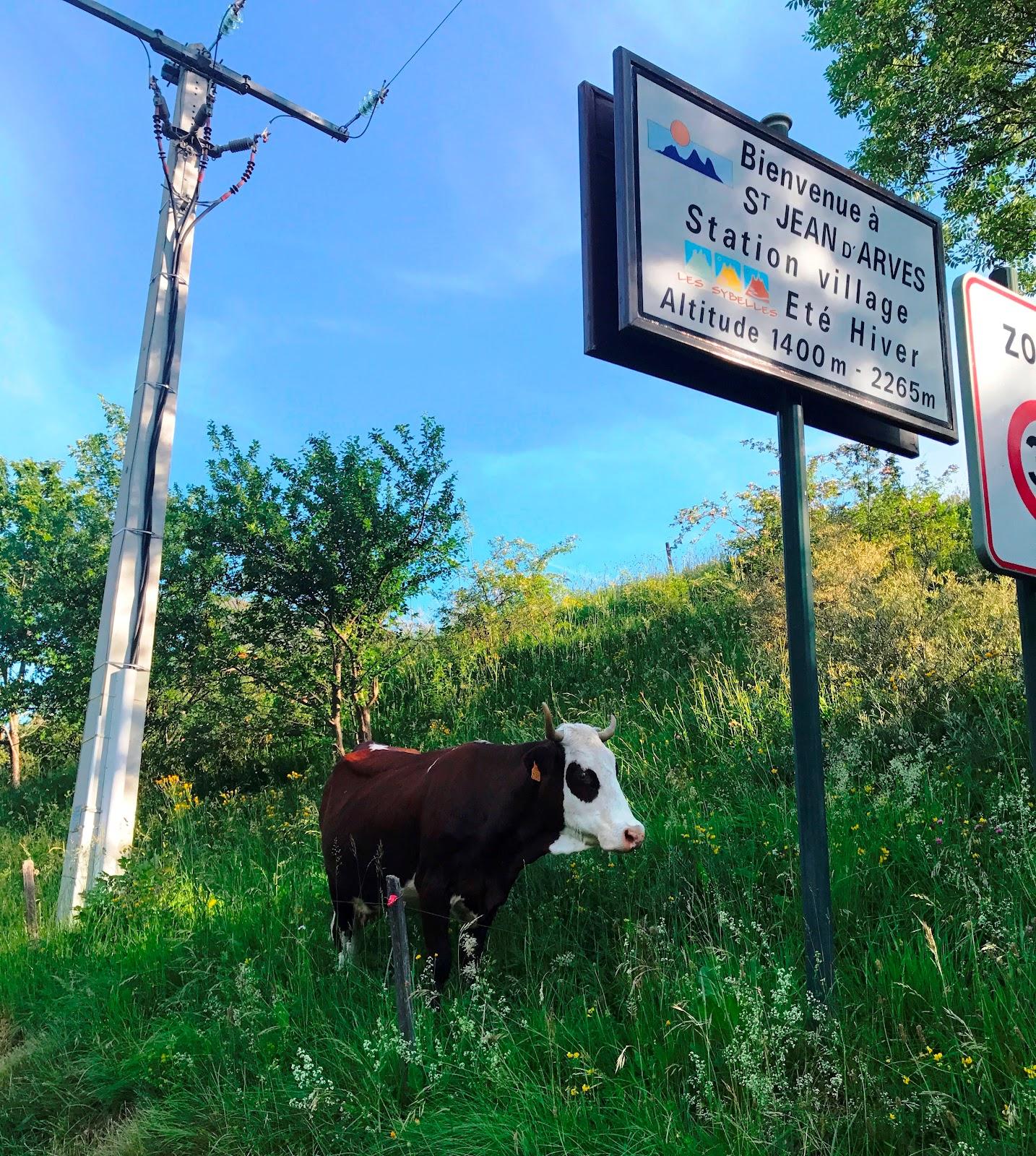 Climbing by bike Col de la Croix de Fer, Saint-Jean-de-Maurienne, sign for St Jean d'Arves and cow