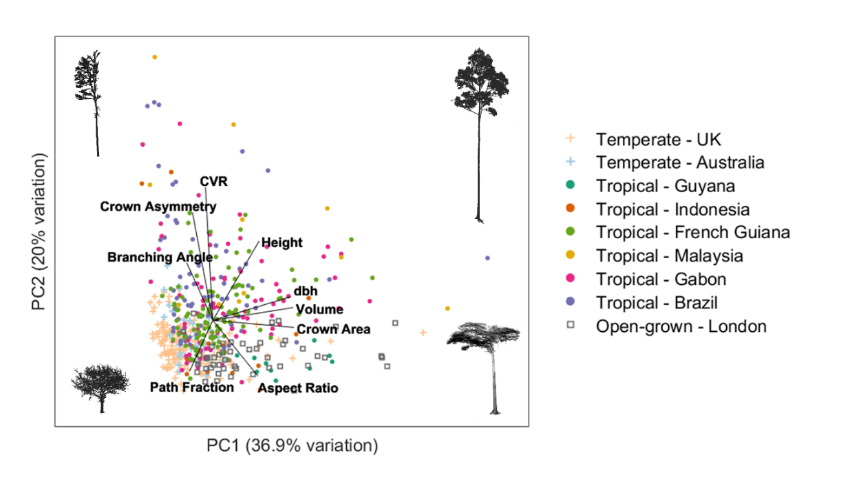 Mapping tree architecture with lasers – Forest Ecology and