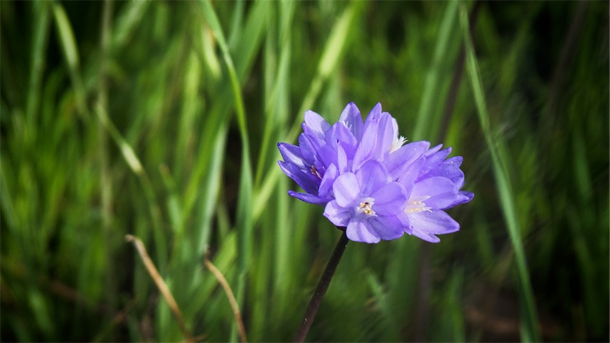 Blue Flower 1.jpg