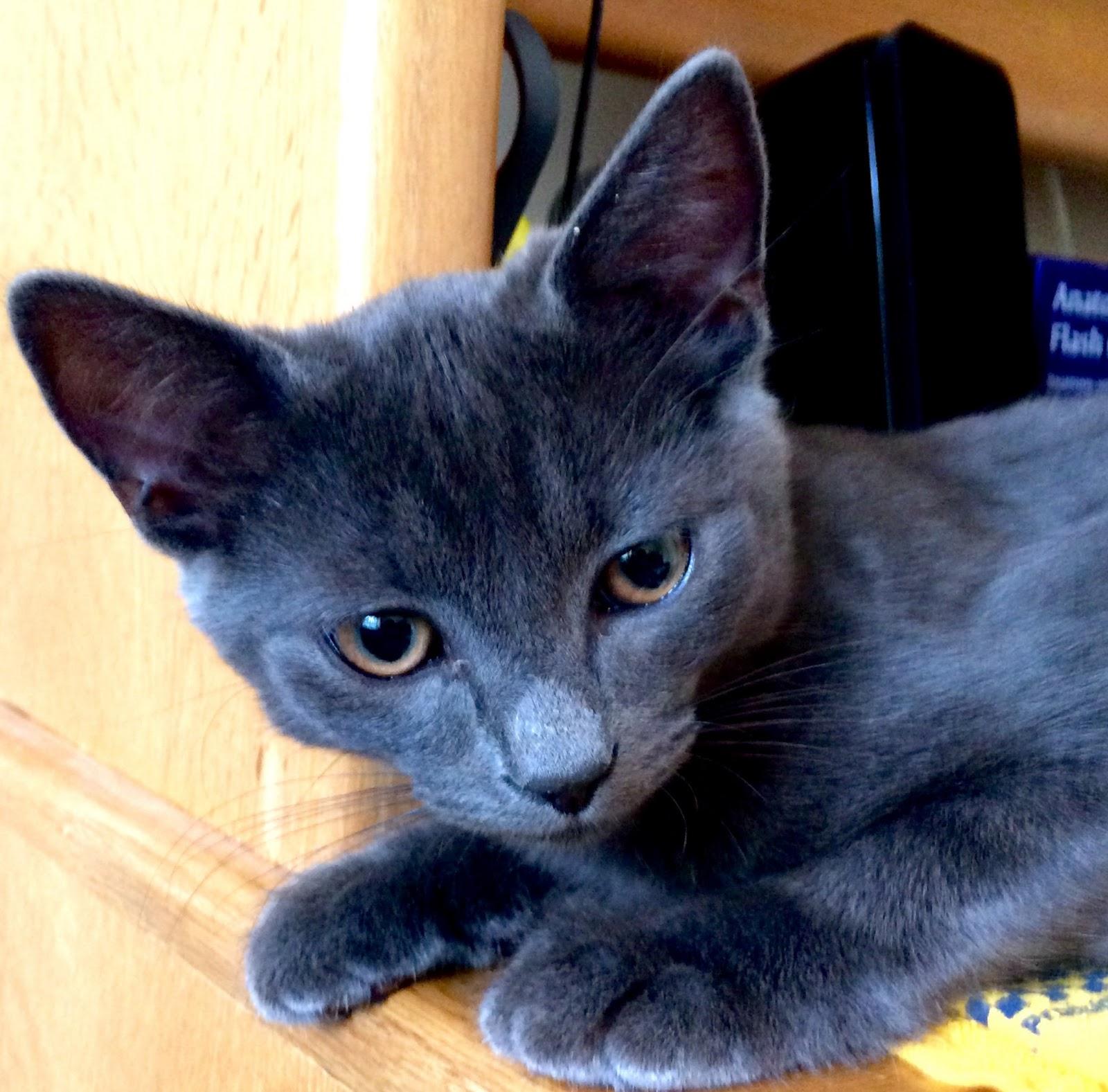 Eric Donahue_Cat 1.tif