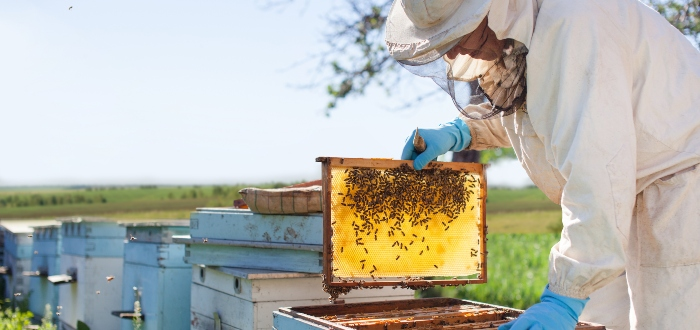 Agriculture business, beekeeping