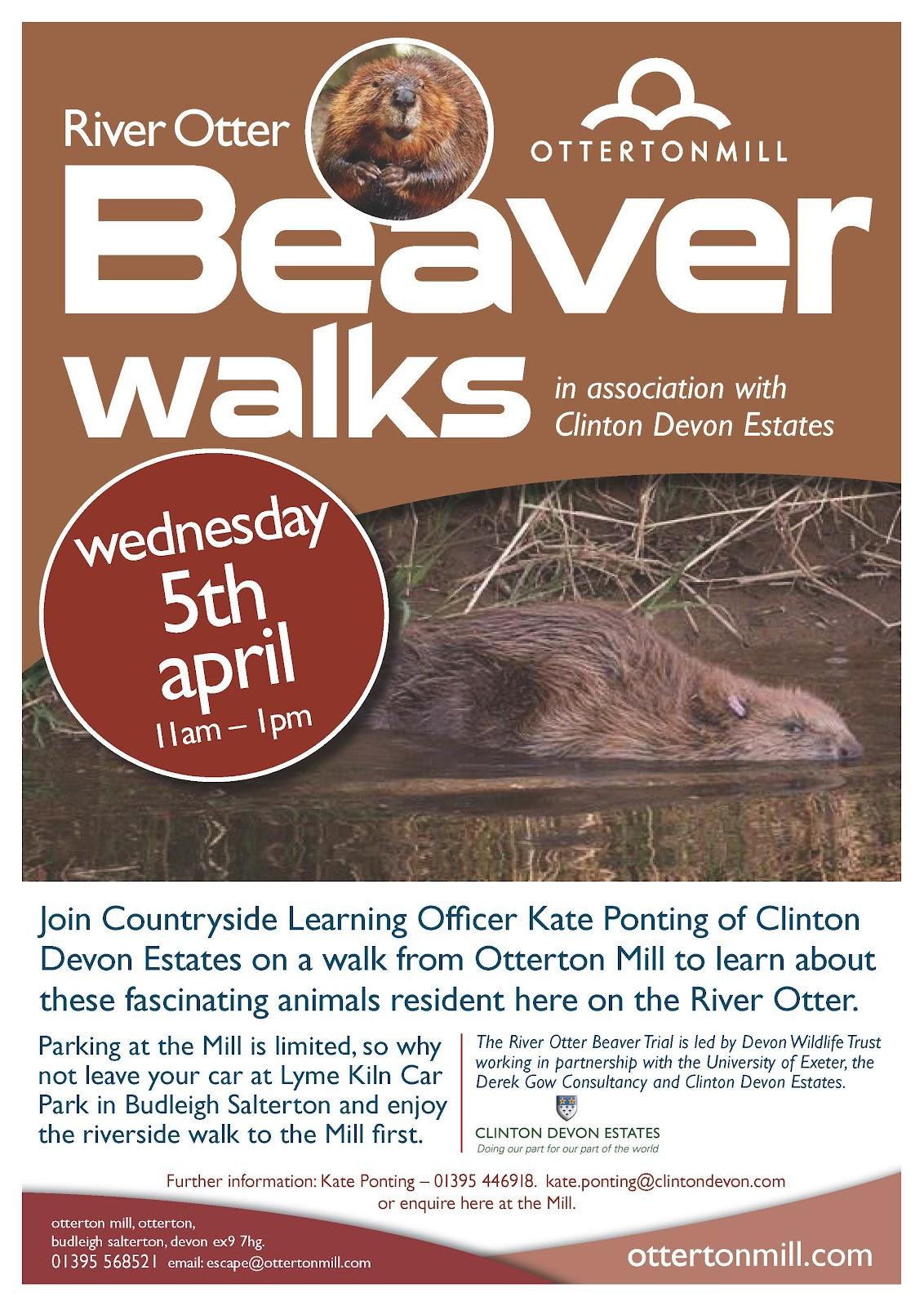 beavers_april17.jpg
