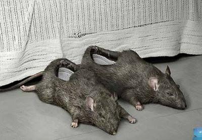 Παντόφλες σε σχήμα ποντικιού