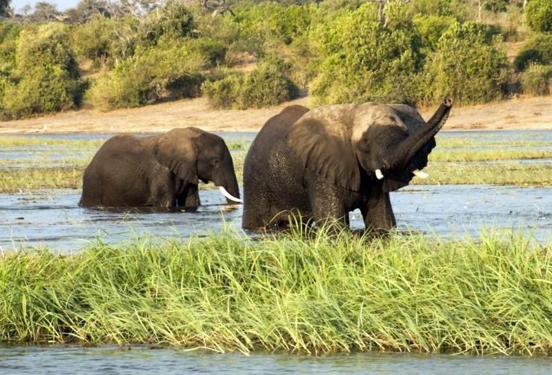 Elephant-sududu.jpg