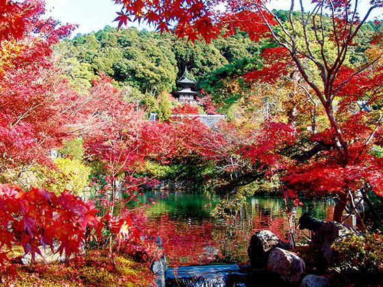 ランキング第8位 永観堂 禅林寺