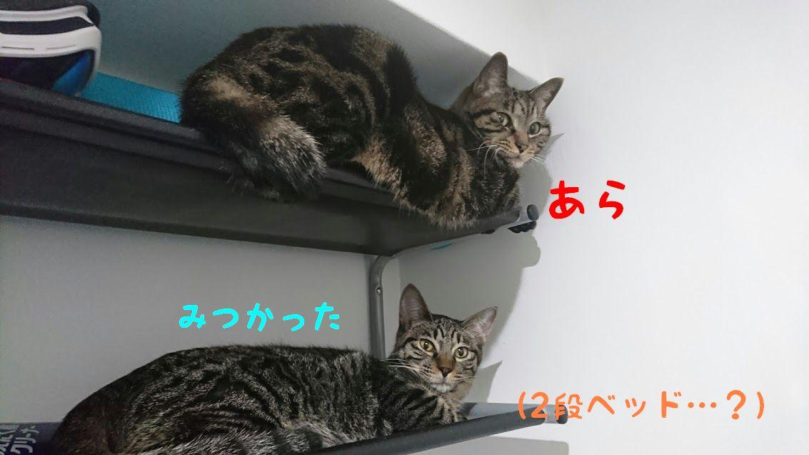 予約6年待ちの猫ちぐらとは?おすすめ猫ちぐらで猫と冬を暖かく過ごそう