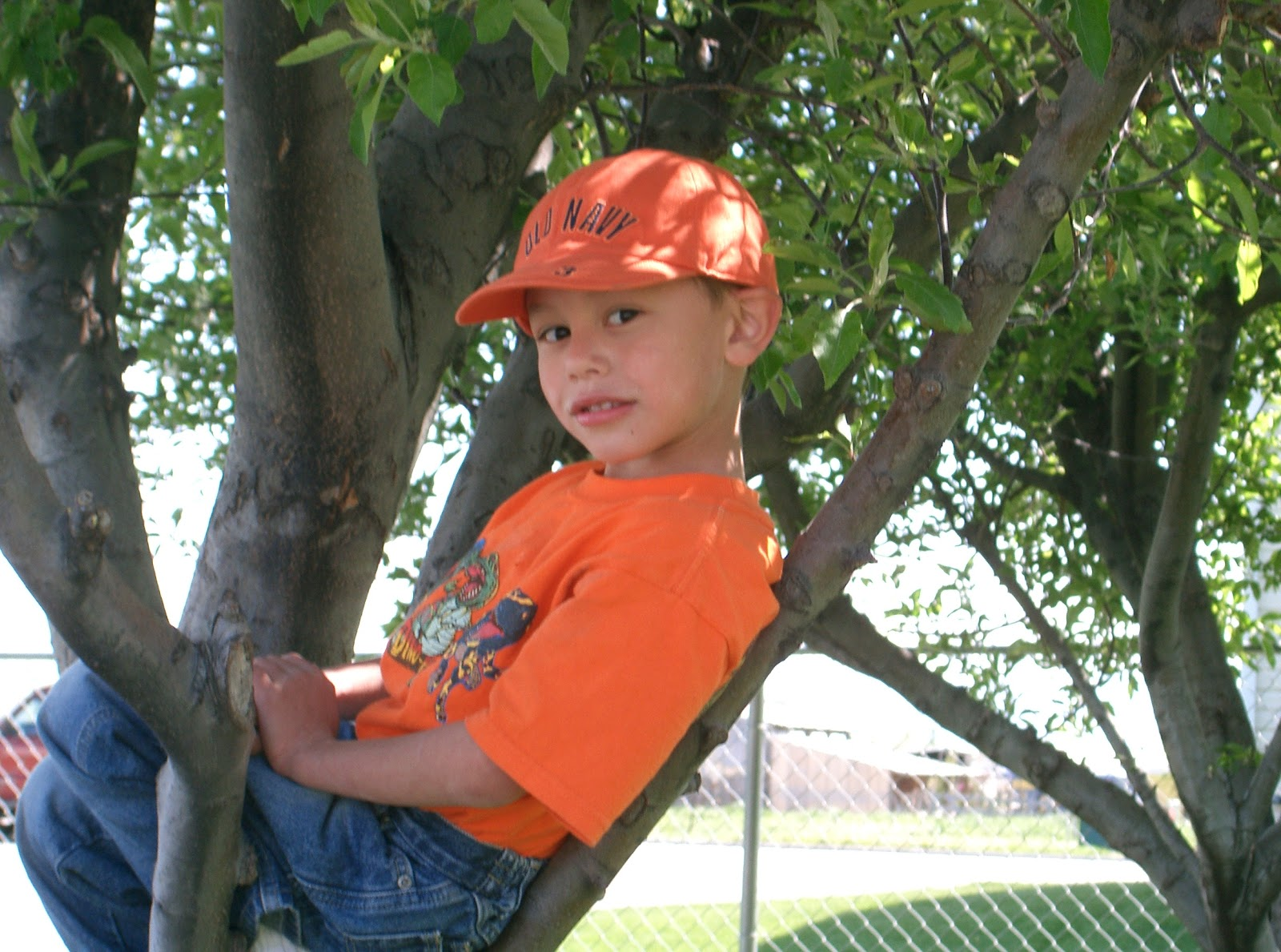 Nathan in Tree 2.jpg
