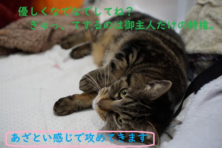 猫に好かれる人と嫌われる人の特徴とは?嫌われる人はコレをしてる!