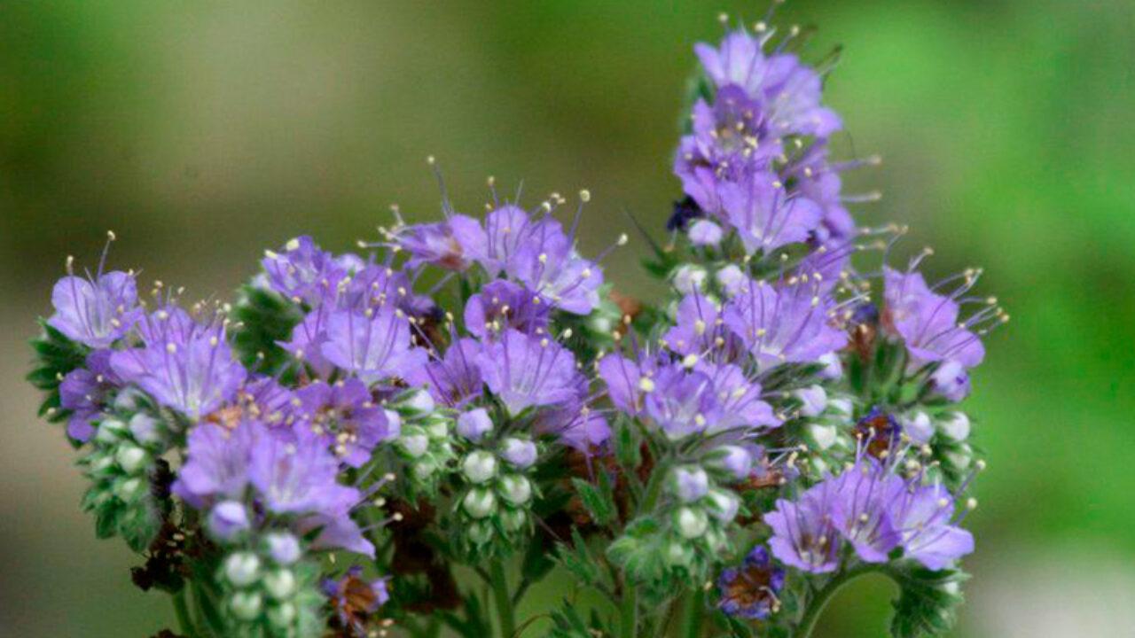 Гидрофильные растения