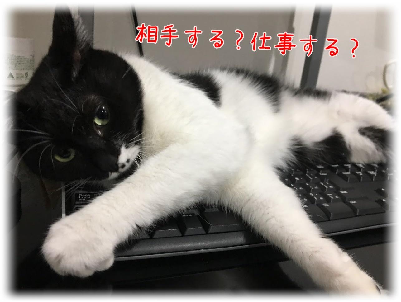 構ってほしい?邪魔したい?意外と複雑な猫のきもち