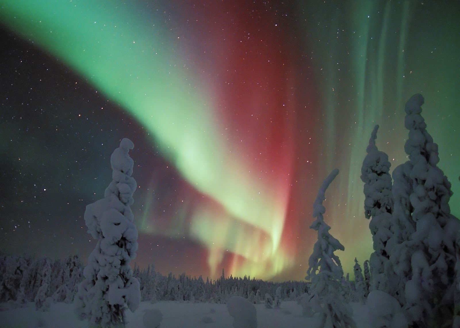 Northern_Lights_in_Snowy_Forest.jpg
