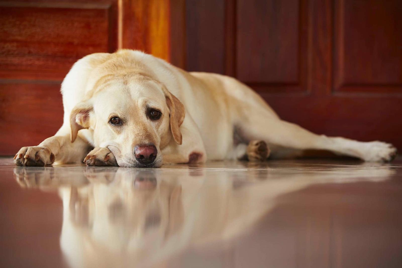 ¿Cachorro causa una infección? Emergencia en Israel