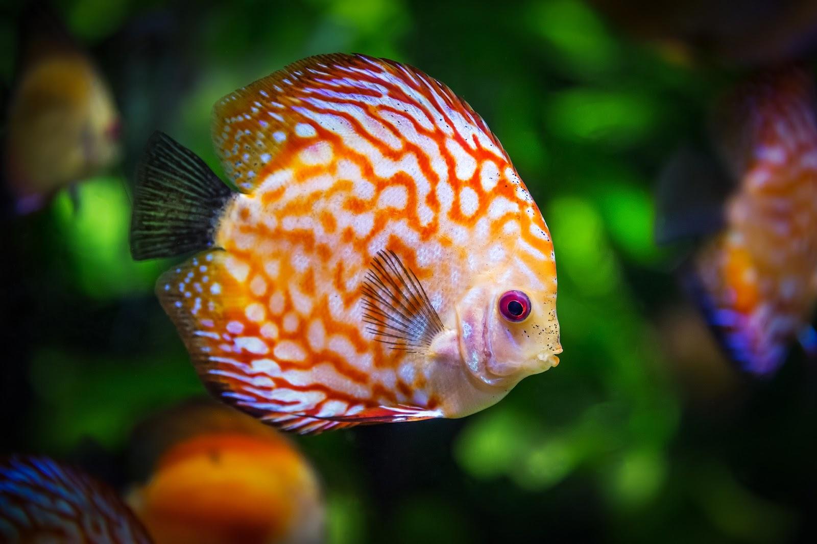 Fish and plant aquarium