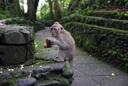 monkey pura lempuyang.jpg