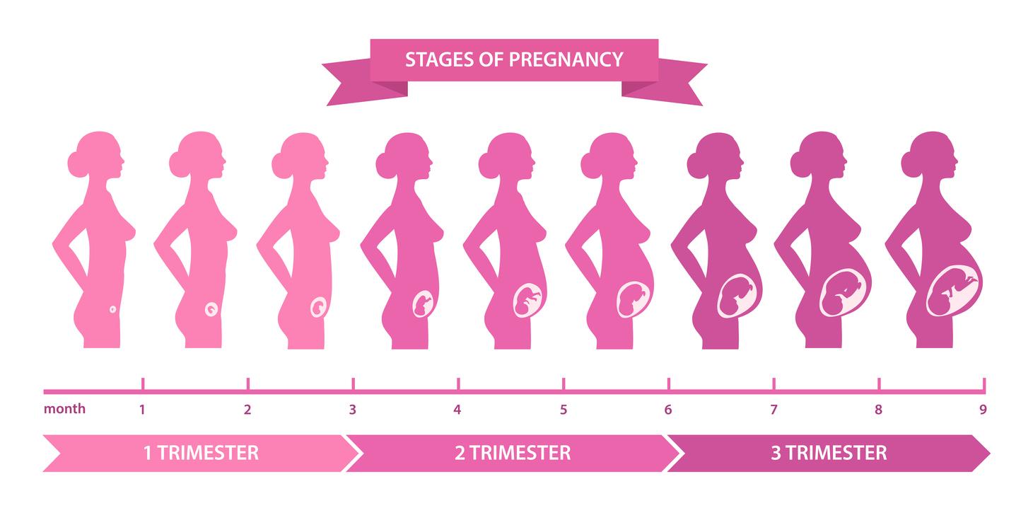 Fetal Development by Week | Lighthouse Pregnancy Resource Center