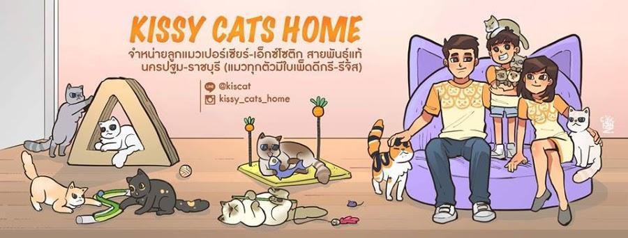 ขายแมวเปอร์เซีย หิมาลายัน เอ็กซ์โซติก นครปฐม ราชบุรี