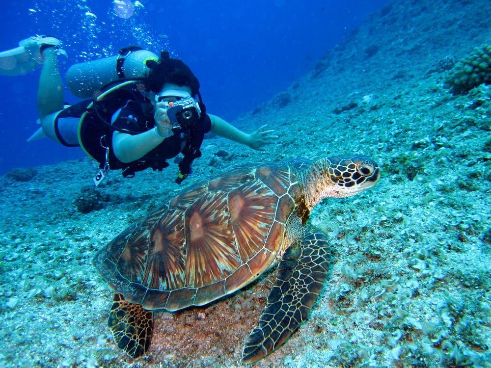 Person Takes Photo Of Tortoise