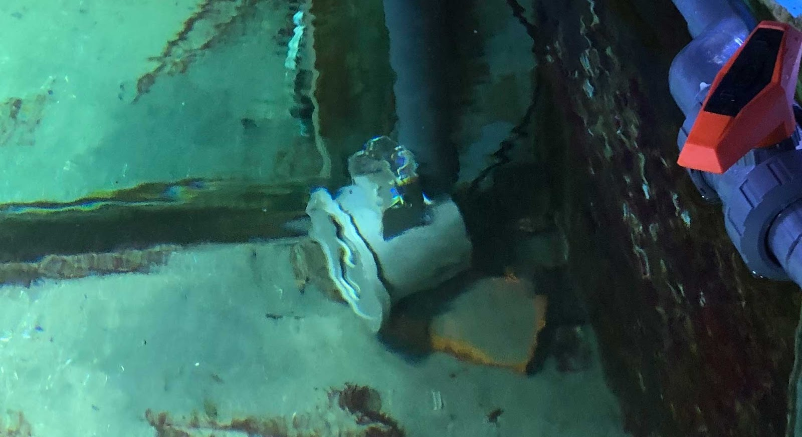 Unterwasser Livecam liefert Live-Streaming aus dem Aquarium.