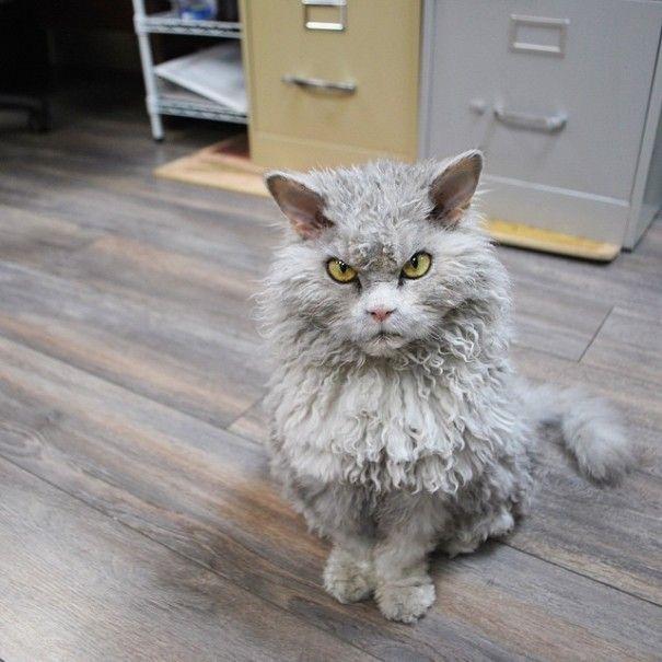 ผลการค้นหารูปภาพสำหรับ แมวเครียด