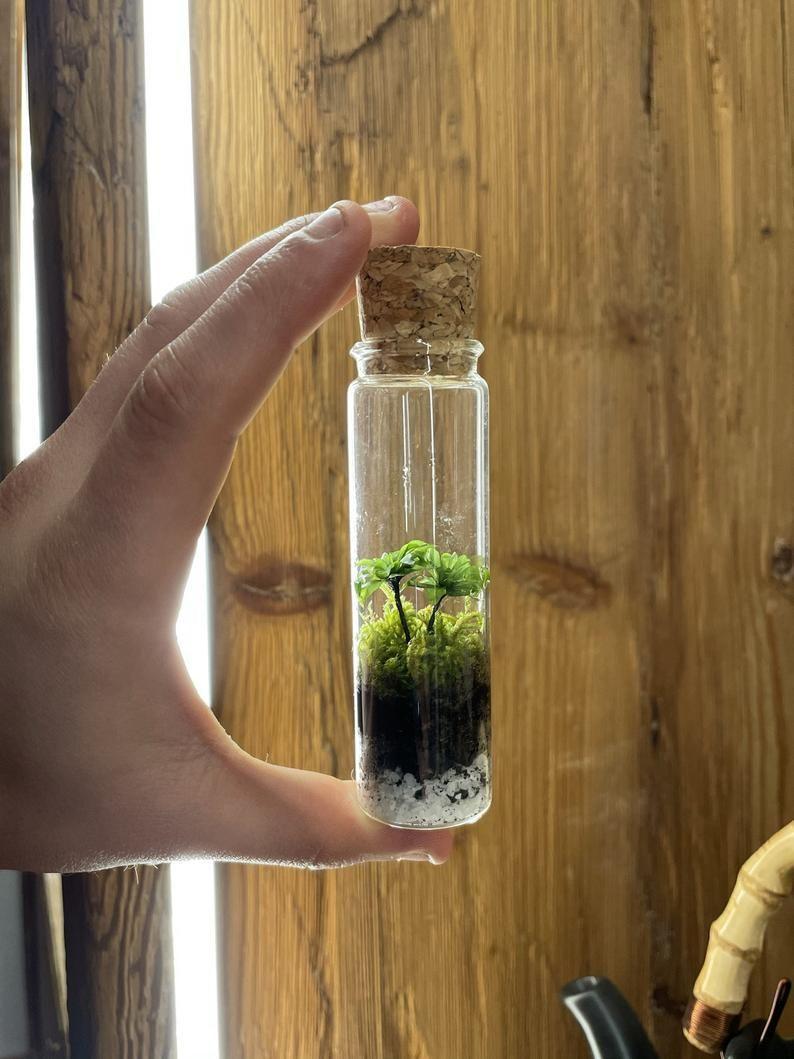 Closed self-sustaining mini moss Terrarium With Moss already | Etsy | Mini  terrarium, Moss plant, Self sustaining terrarium