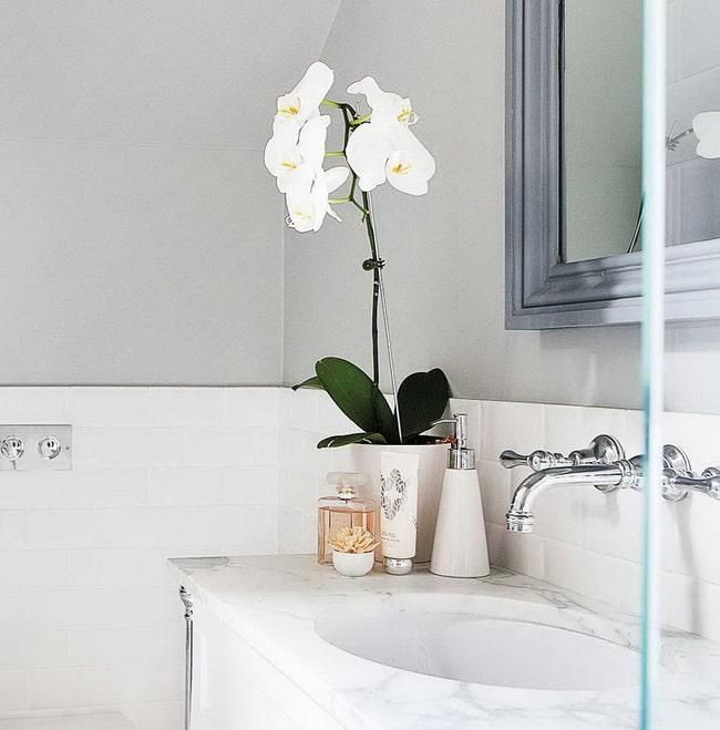 Orquídeas no banheiro