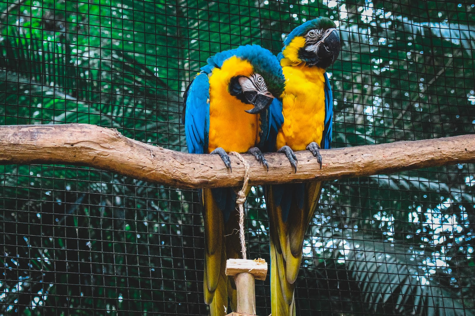 Image of Gili Meno Birds park