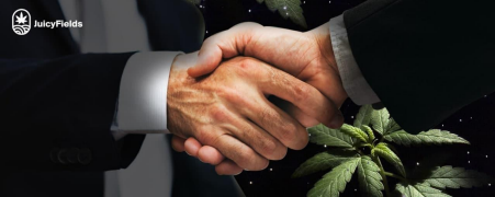 cannabis, latinoamérica