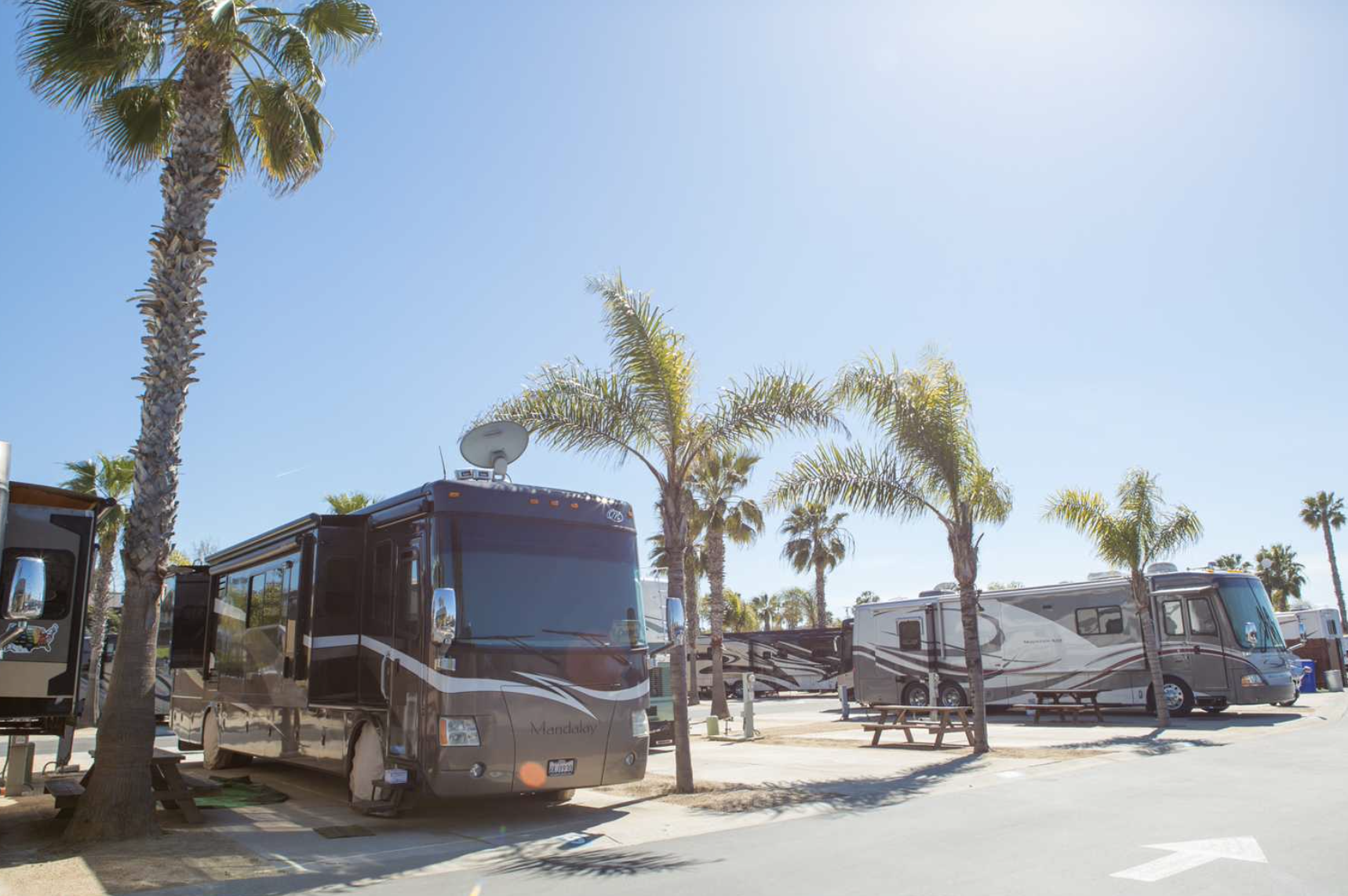 Campground in California with RVs parked between palm trees.