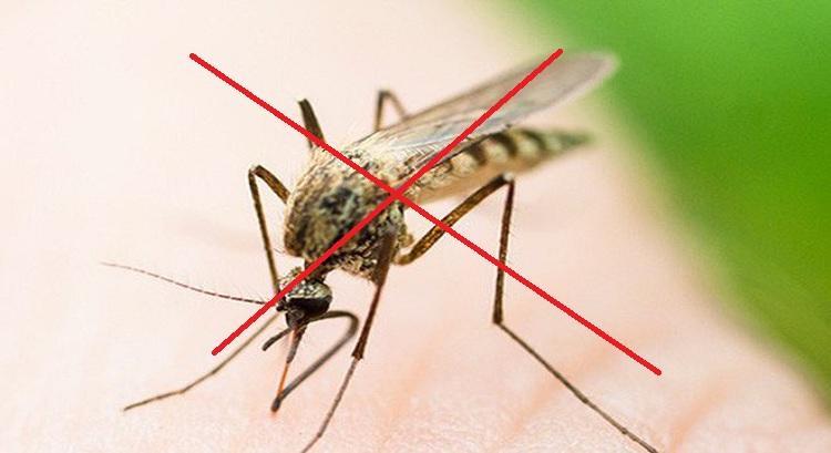 C:\Users\hp\Desktop\Dịch-vụ-diệt-muỗi-Hưng-Yên.jpg