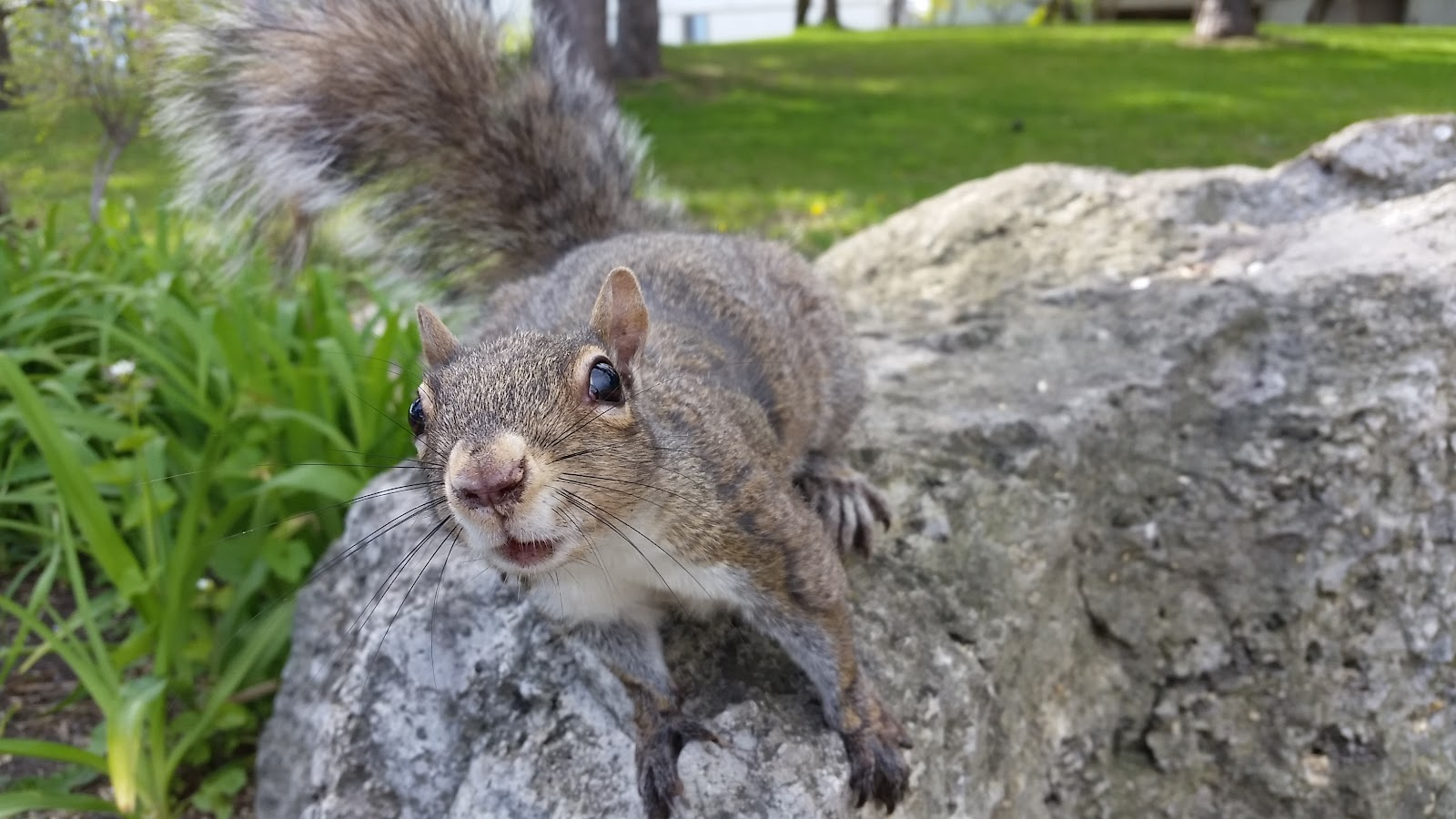 This squirrel tried to take my phone a second after taking this photo closeup of the squirrel.