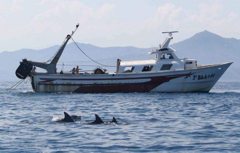 Delfines de Tramuntana - SUBMON