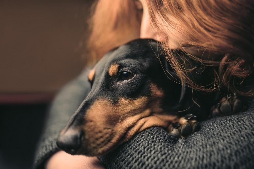 Meningitis and Your Pet