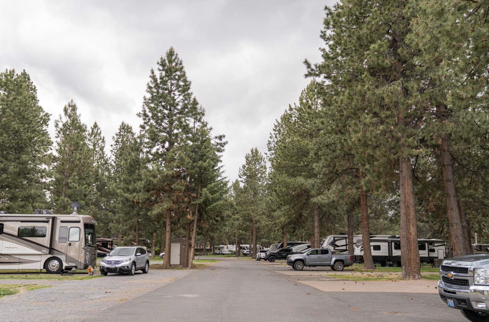 Tall trees at campground with RVs parked in-between