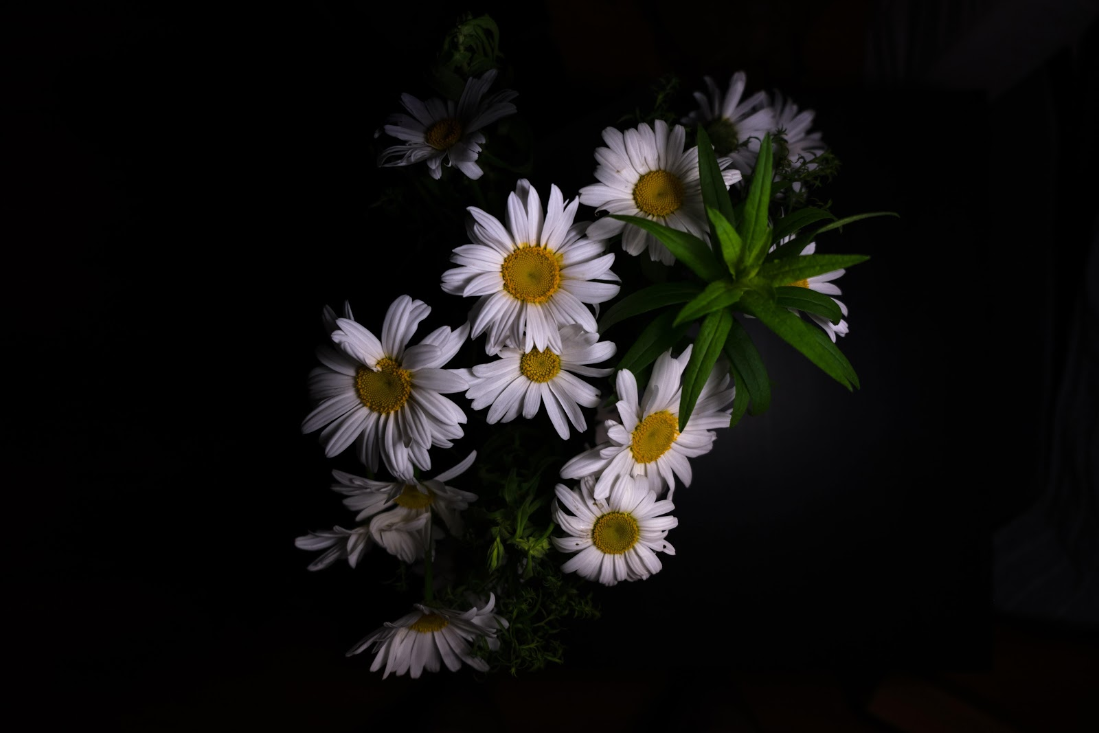 herbs and supplements for depression,