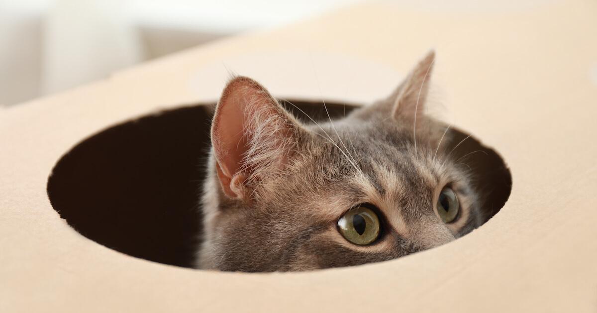 les cartons font d'excellentes cachettes pour les chats