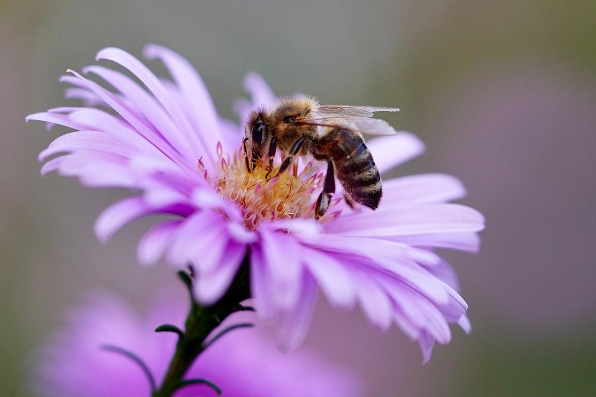 As abelhas têm um papel importante de polinização e produção de mel, que favorece tanto o agronegócio quanto a indústria da beleza. (Fonte: Pixabay)