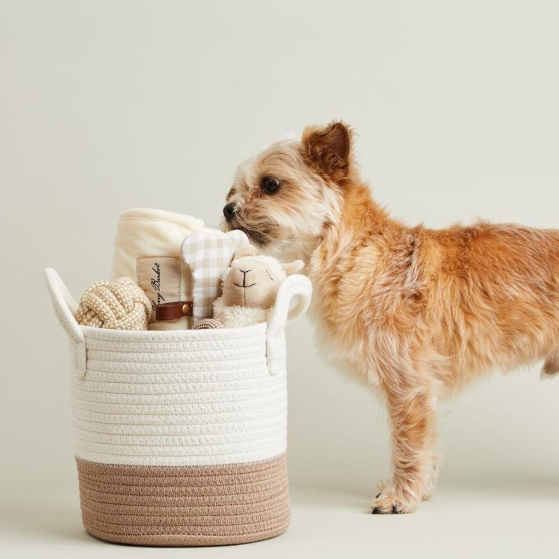 dog peek inside the welcome home pet bundle