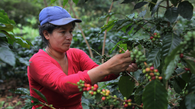 A Coffee DevelopmentDevex Can Become Better How Tool For PTXOiuZk