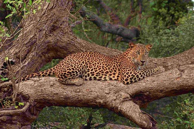 Yala National Park Private Full-Day Leopard Safari with Lunch 2020
