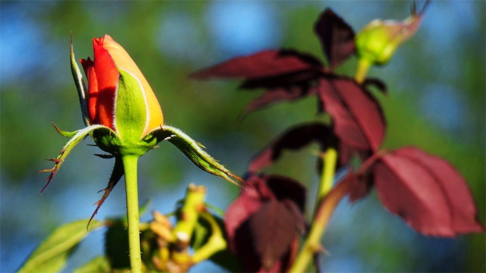 Ever Bloomin Lovely.jpg