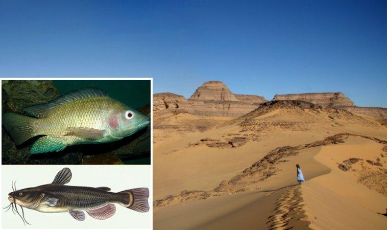 Descoberta de peixes no Saara - O que mais é enterrado sob a areia?