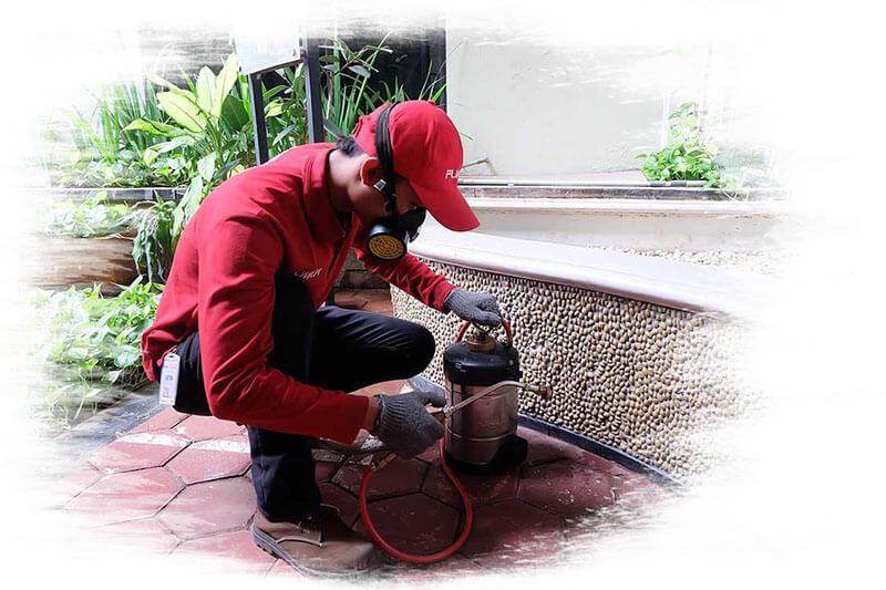 Fumida pest control services